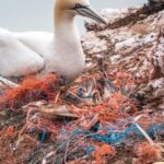 Marine pollution | The main type of sea pollution