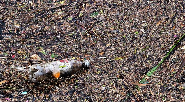 Biodegradation waste | Waste management