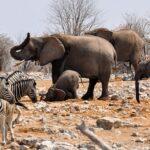Ethiopian region fauna