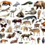 Mammalian status in Pakistan