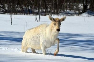 Nearctic region fauna
