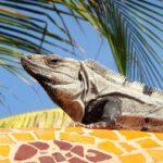 Palaearcticregion fauna