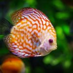 Toxic effects of heavy metals on fishes