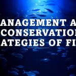 Management and conservation strategies of fishes